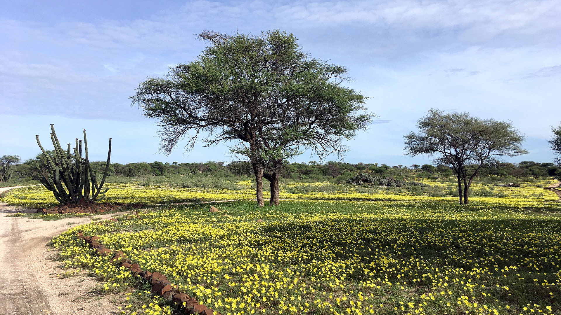 Nach vielen Jahren extremer Dürre hatte Namibia 2020 endlich wieder eine richtige Regenzeit